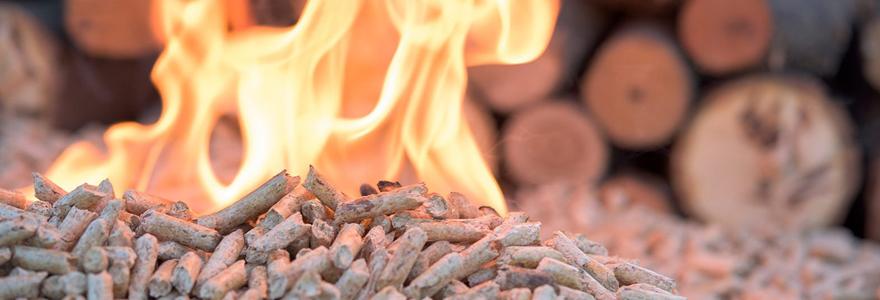 granulé de bois